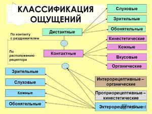 Виды ощущений в психологии